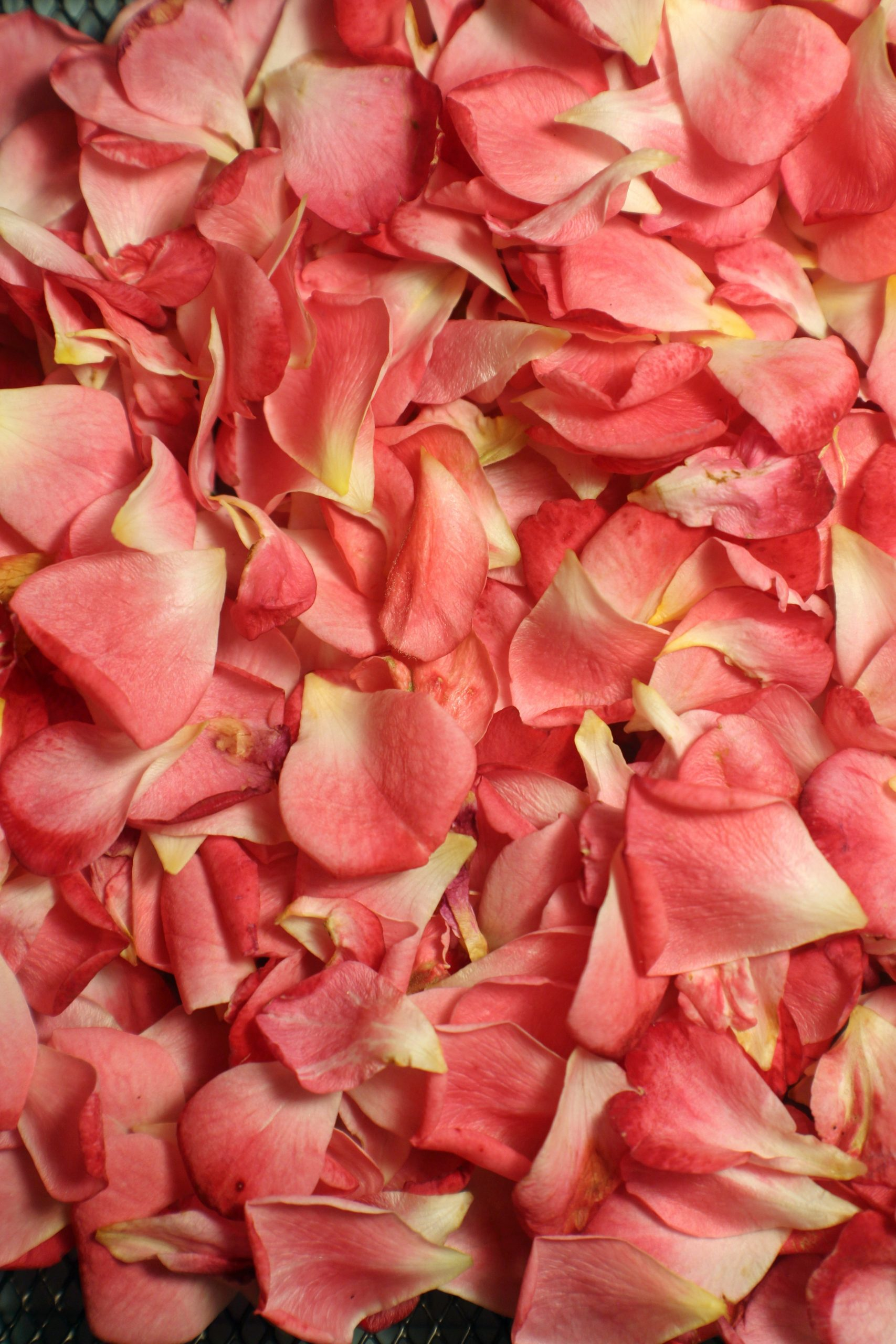 Tónico de Rosas ¿Por qué tantas personas lo prefieren?